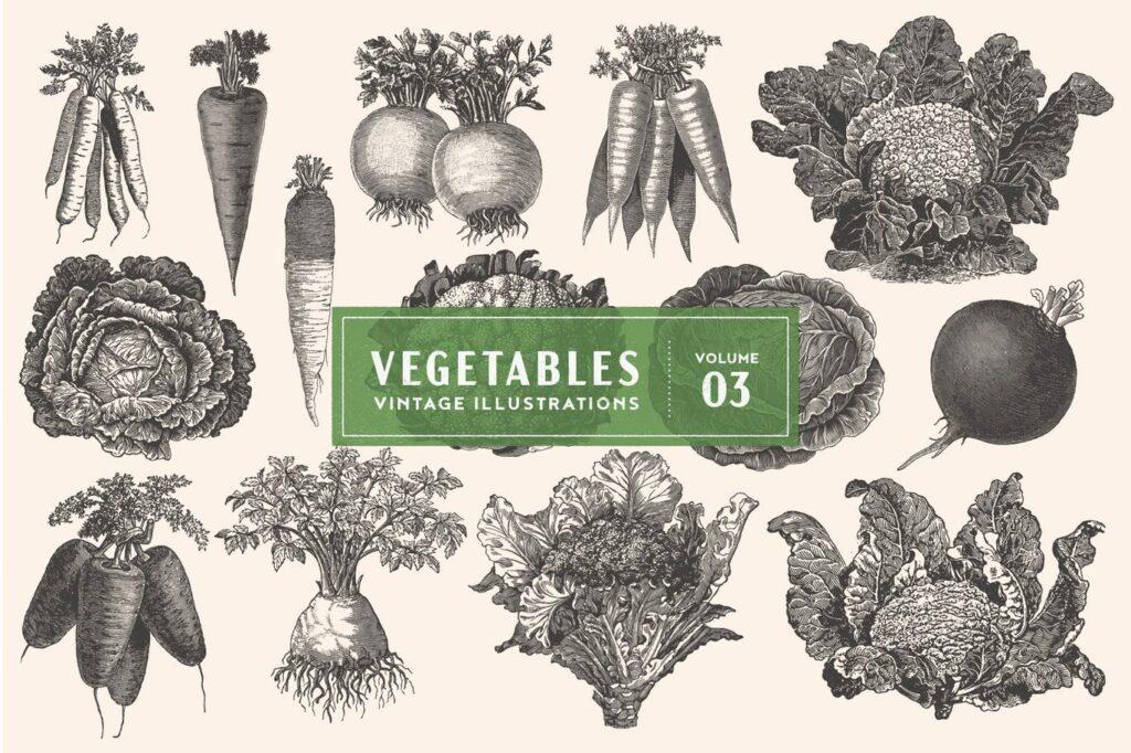 14个古董雕刻风格各种蔬菜餐饮品牌装饰图案Vintage Vegetable Illustrations Vol. 3插图