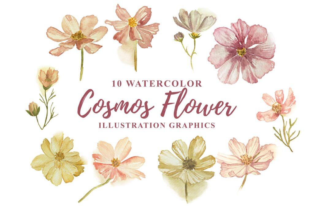 10 个水彩宇宙花卉插画图形水彩剪纸及装饰元素10 Watercolor Cosmos Flower Illustration Graphics插图