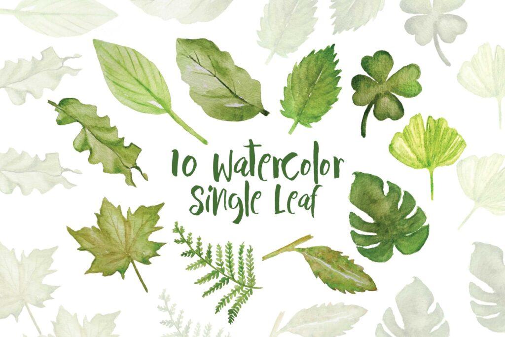 绿植装饰图案下载花纹图案相框装饰画Ofi 4 Watercolor Tropical Graphics插图(1)