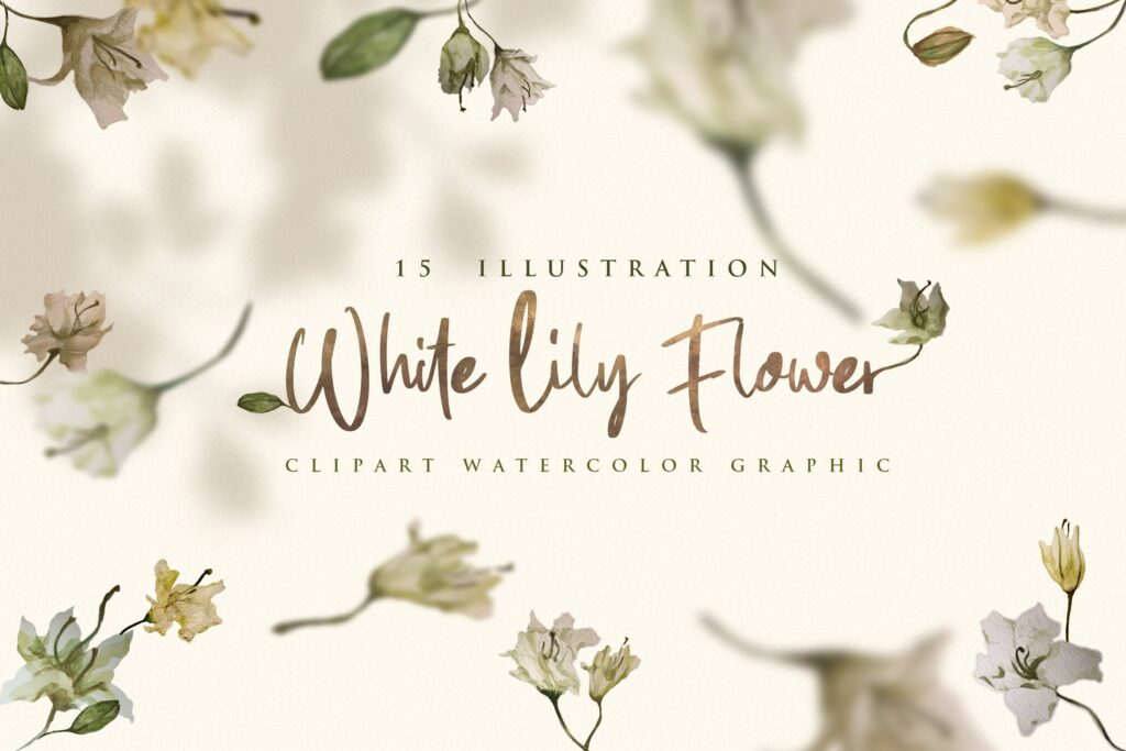 15个海葵花卉水彩插图装饰图案15 Watercolor White Lily Flower Illustration插图