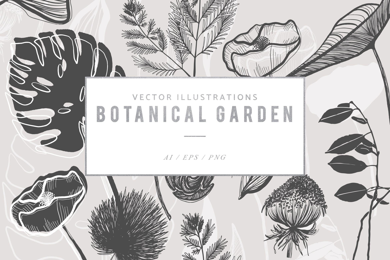手绘植物灵感矢量插图集图案纹理Botanical Garden Illustrated Graphics插图