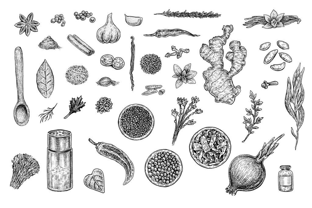 手绘香草香料系列装饰图案Herbs And Spices Set插图