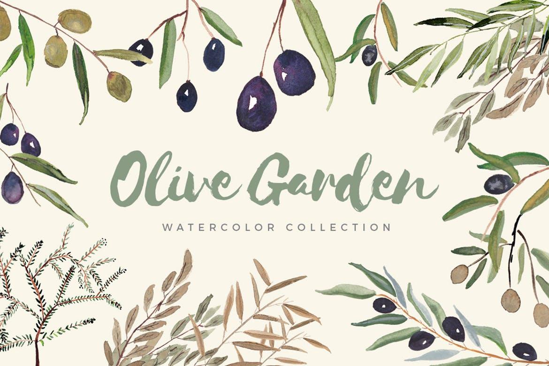 橄榄花园水彩画图案花纹装饰图案Olive Garden Watercolor Collection插图