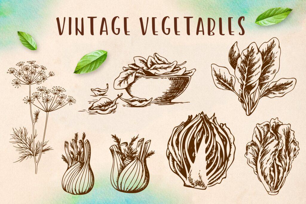 手工绘制的矢量蔬菜在复古风格的集合Set of Vintage Vegetables插图
