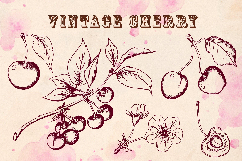 手绘矢量樱桃在复古风格元素下载Vintage Cherry插图