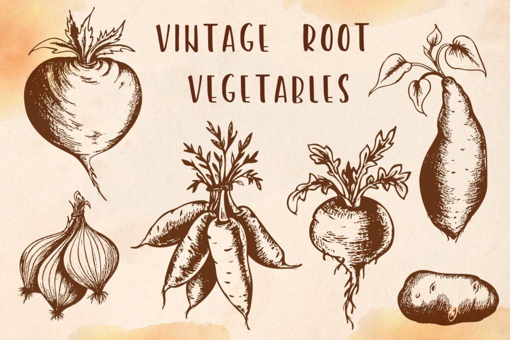 手绘矢量蔬菜复古风格合集美食品牌装饰图案Vintage Root Vegetables插图