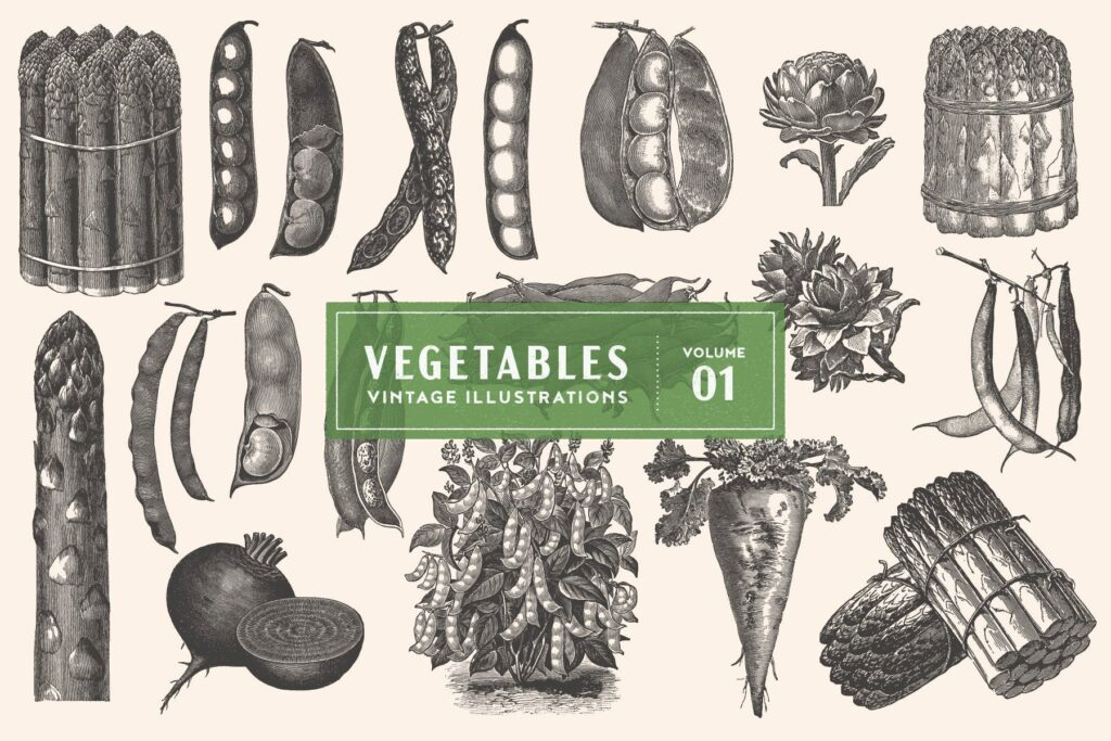 一套19个古董雕刻风格各种蔬菜插图企业品牌装饰图案Vintage Vegetable Illustrations Vol 1插图