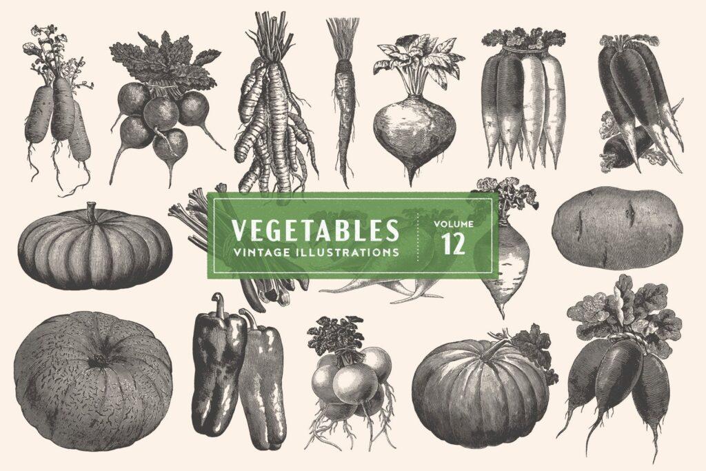 17个古董雕刻风格的各种蔬菜插图有机蔬菜装饰图案花纹Vintage Vegetable Illustrations Vol 12插图