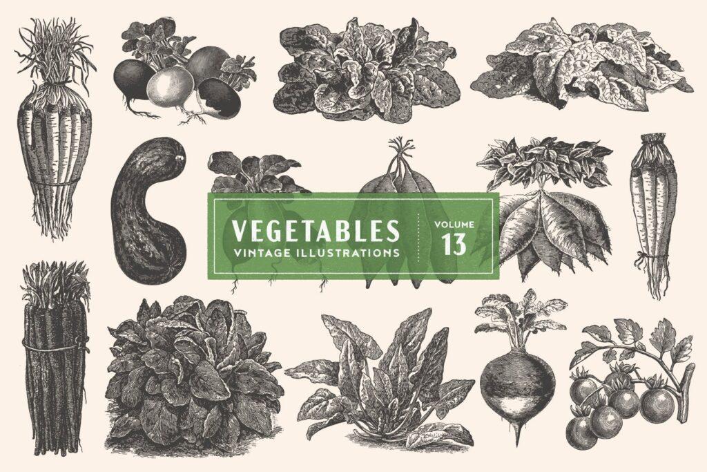 14个古董雕刻风格的各种蔬菜插图有机蔬菜装饰图案花纹Vintage Vegetable Illustrations Vol 13插图