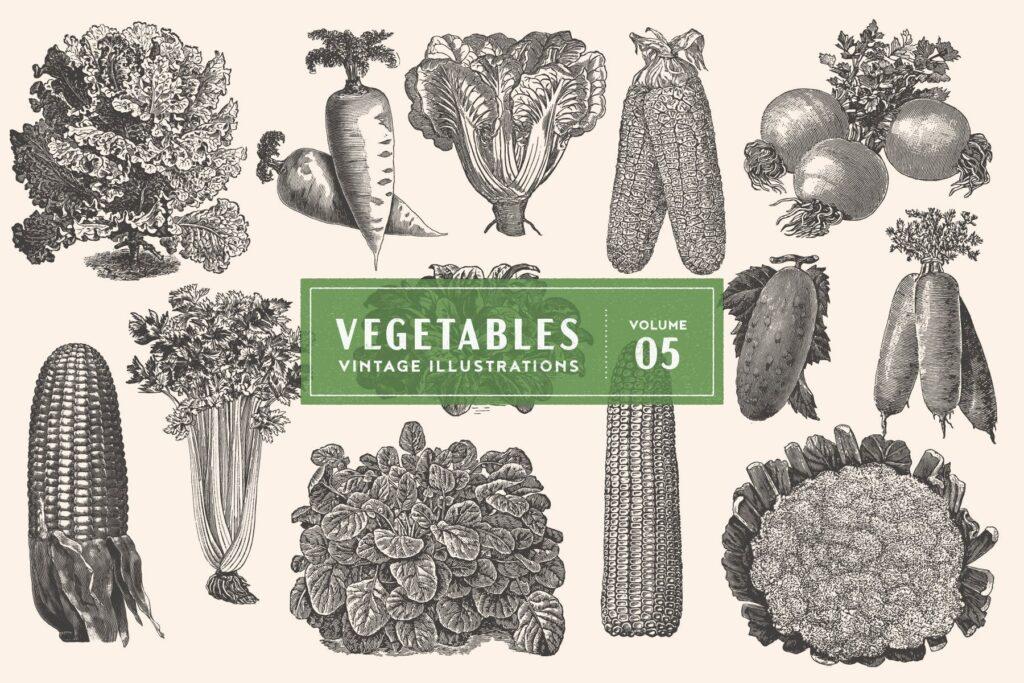 3个古董雕刻风格的各种蔬菜插图餐饮美食品牌装饰图案Vintage Vegetable Illustrations Vol. 5插图