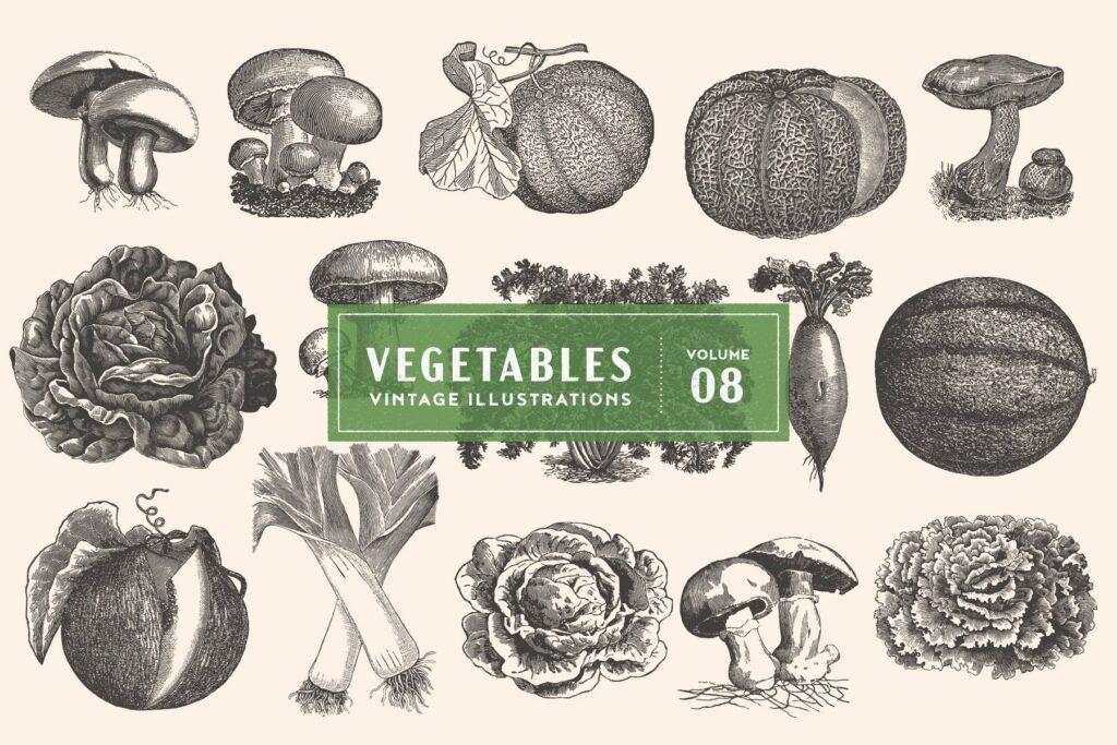 15个古董雕刻风格各种有机蔬菜插图企业餐饮品牌装饰图案花纹Vintage Vegetable Illustrations Vol 8插图