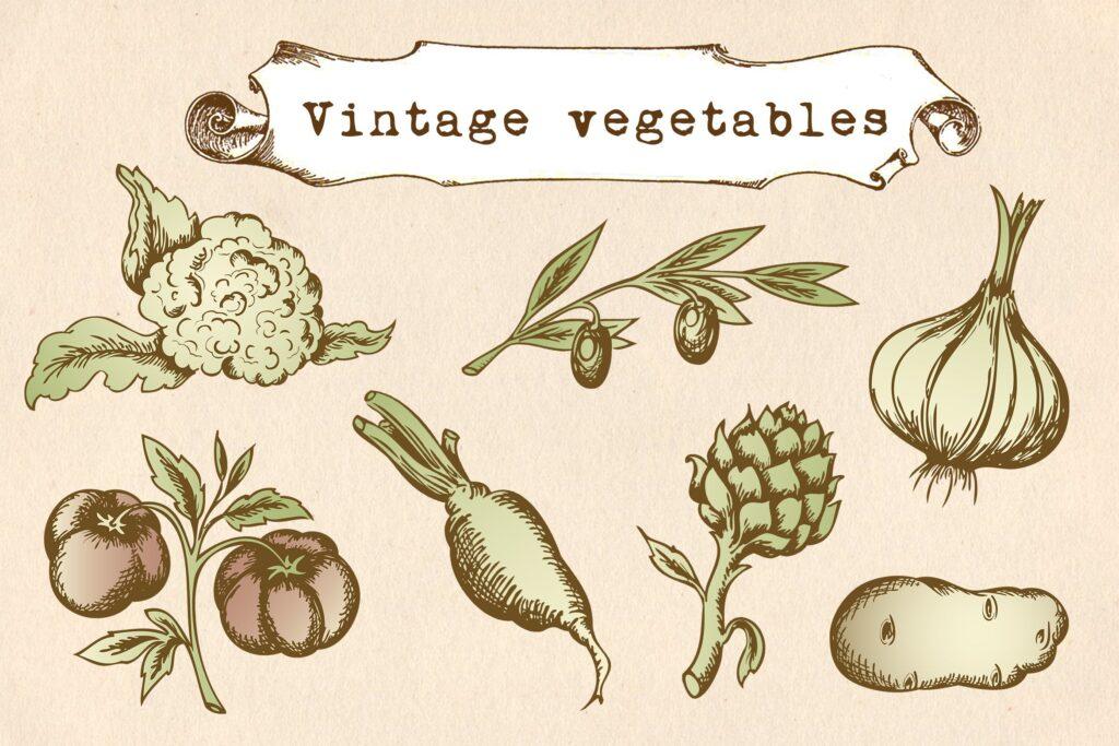 矢量手绘蔬菜复古风格有机蔬菜品牌装饰图案花纹Vintage Vegetables Set插图