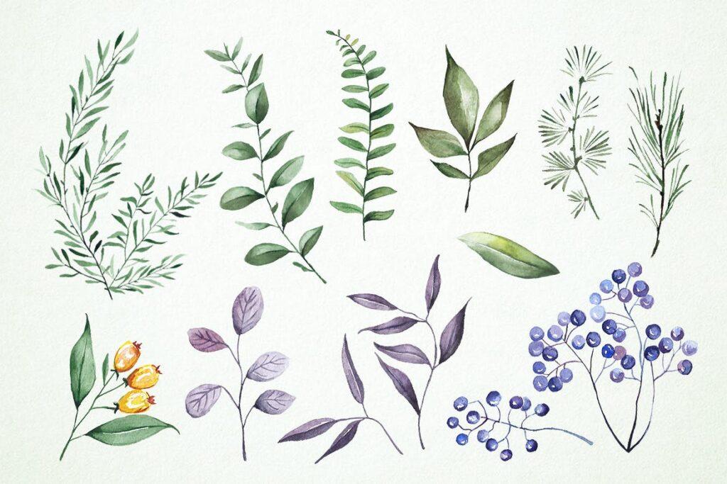 10个水彩花卉插画图形水彩剪贴画及装饰元素10 Watercolor Tweedia Flower Illustration Graphics插图(1)