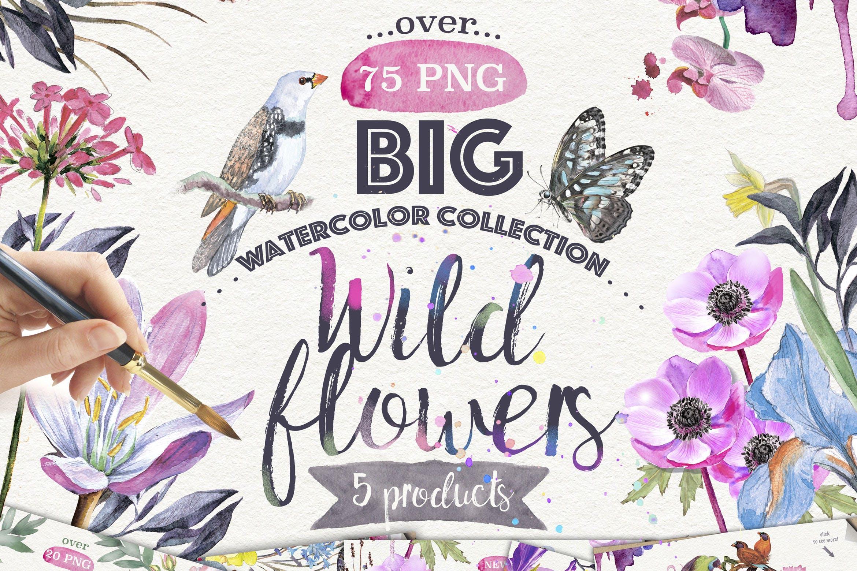 花束水彩鸢尾花水彩图案花纹素材下载Wild flowers collection 75 PNG插图