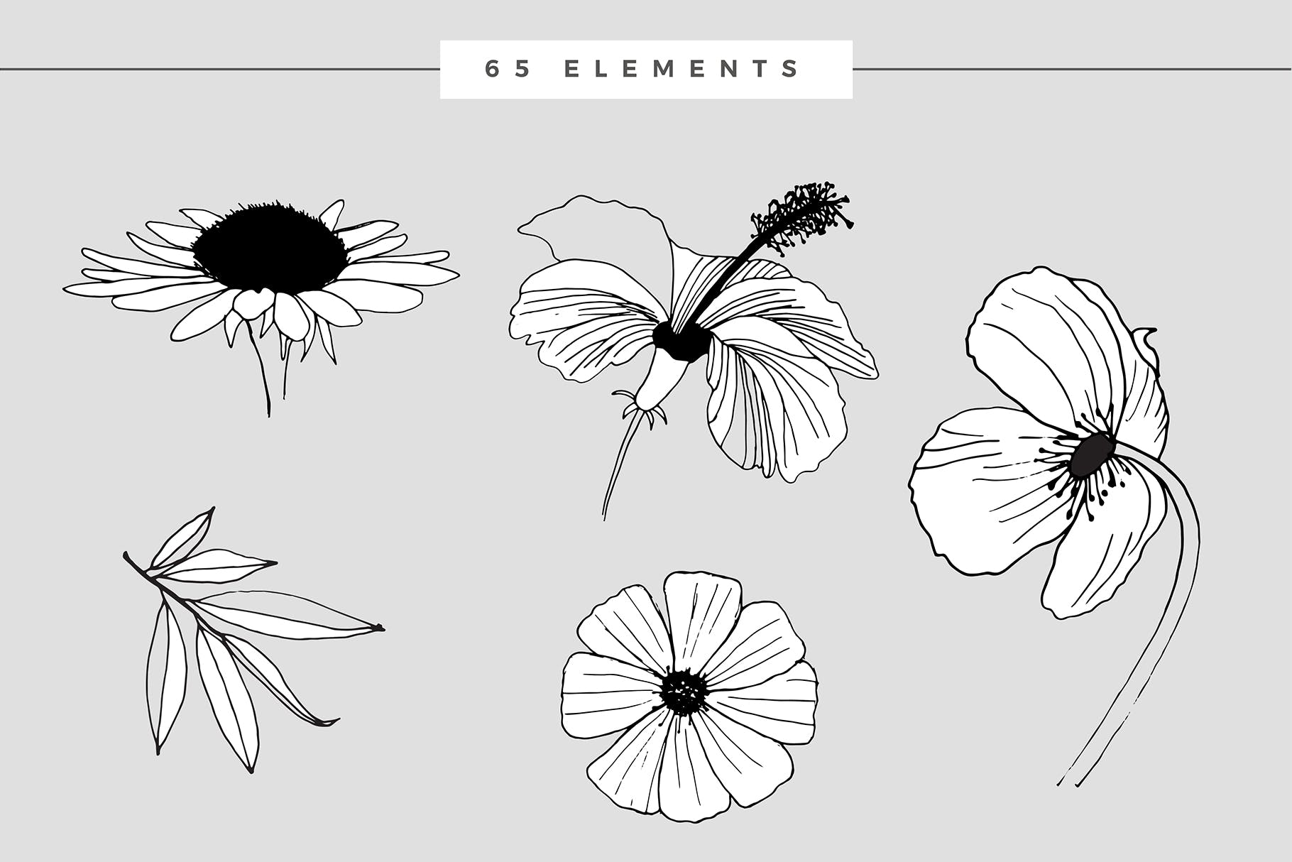 图形花卉图案装饰性元素图案花纹素材下载Graphic Flowers Patterns Elements插图(8)