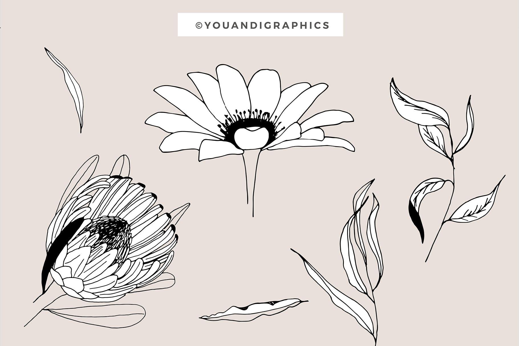 图形花卉图案装饰性元素图案花纹素材下载Graphic Flowers Patterns Elements插图(9)