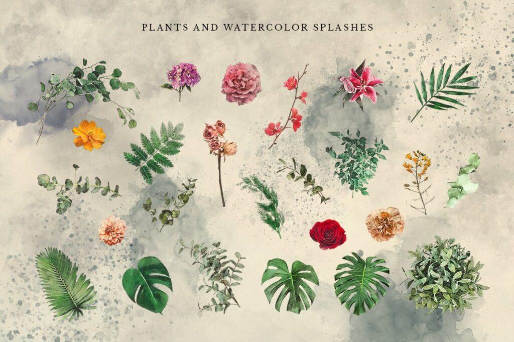 自然和森林主题元素装饰图案创意设计Forest Illustrations Graphics Kit插图(13)