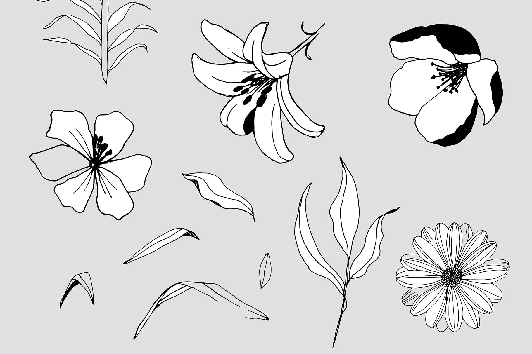 图形花卉图案装饰性元素图案花纹素材下载Graphic Flowers Patterns Elements插图(11)