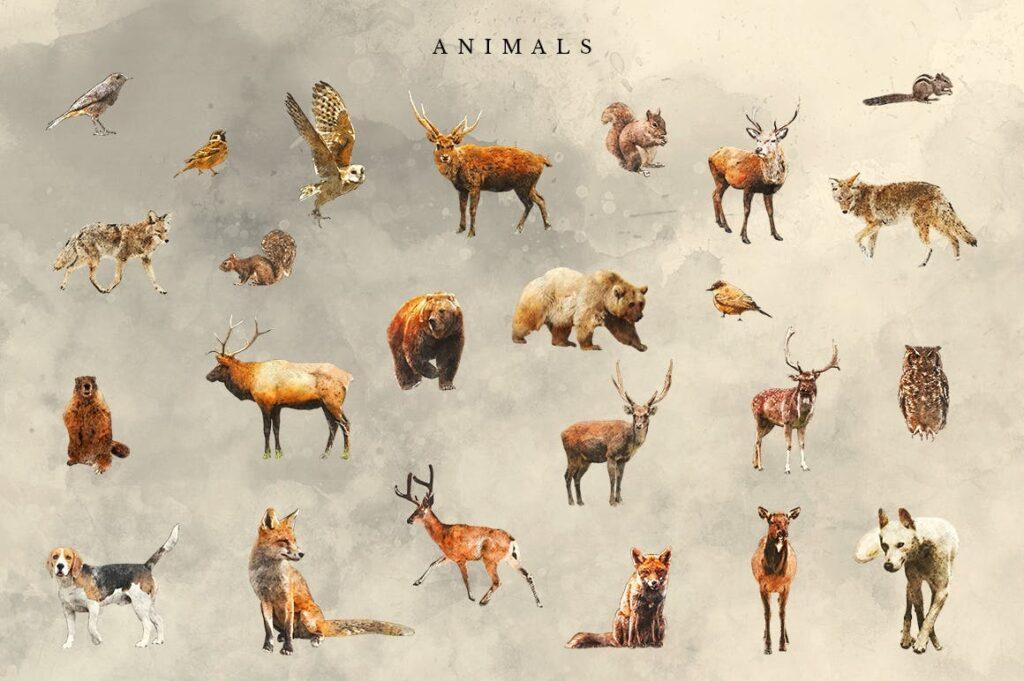 自然和森林主题元素装饰图案创意设计Forest Illustrations Graphics Kit插图(14)