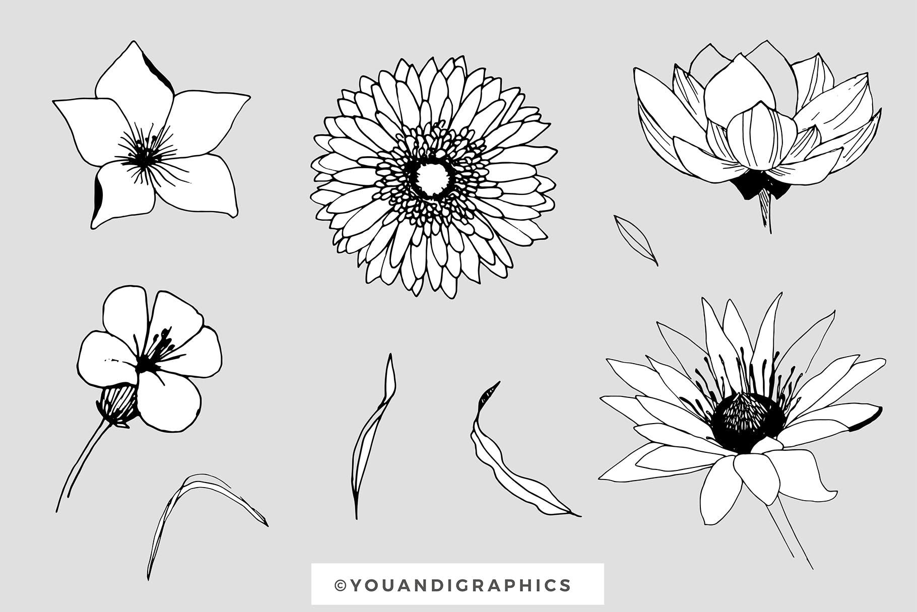 图形花卉图案装饰性元素图案花纹素材下载Graphic Flowers Patterns Elements插图(13)