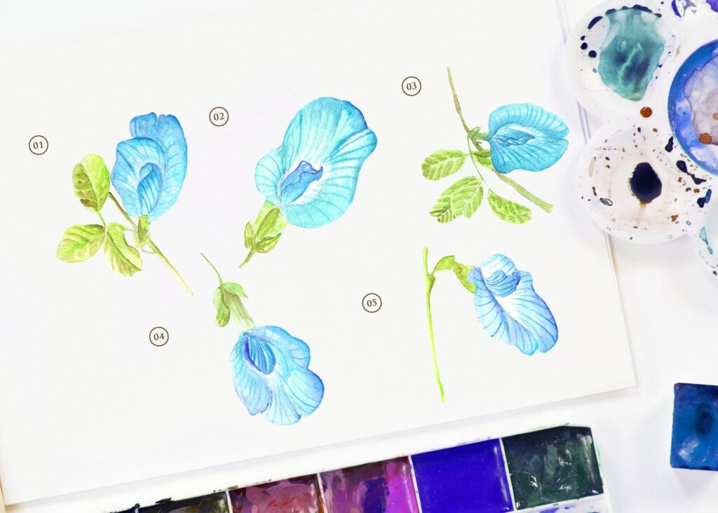 15个蓝色水彩蝴蝶豌豆花插图装饰图案15 Watercolor Butterfly Pea Flower Illustration插图(1)