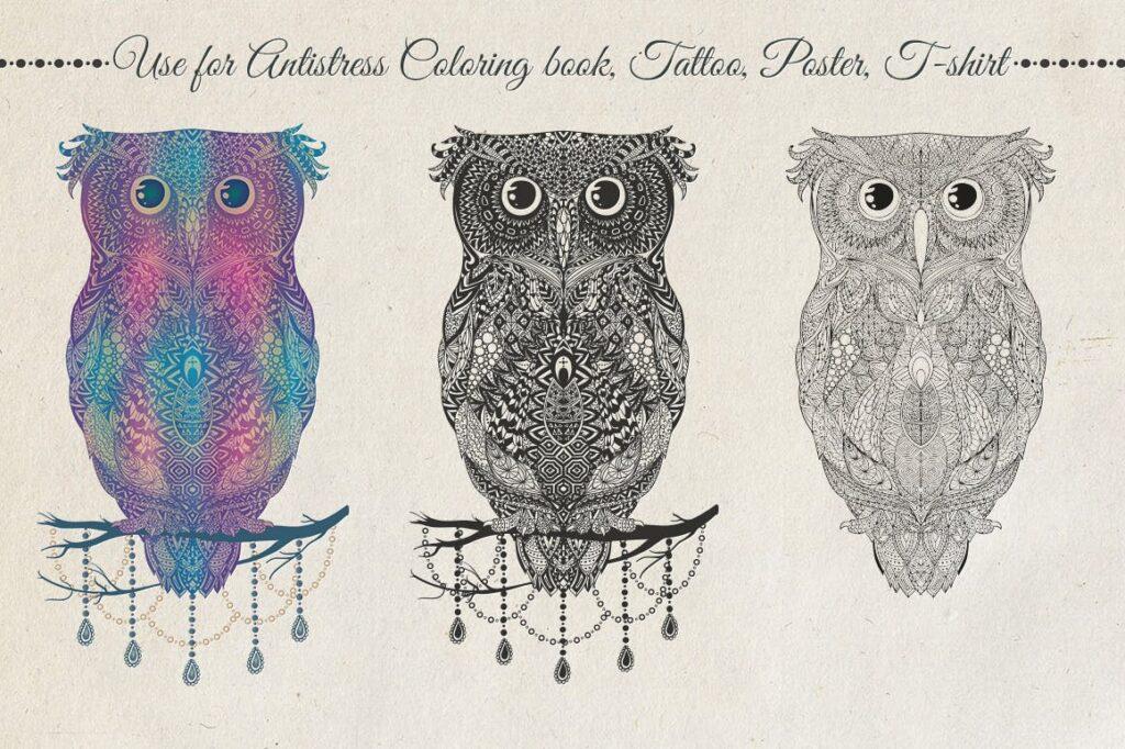 精致手绘猫头鹰插图装饰图案纹理Owl Illustration Black Colorful插图(1)