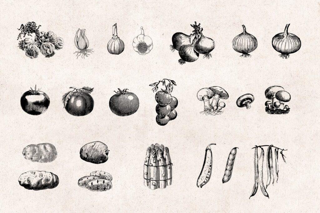 75个矢量化的复古雕刻蔬菜手绘餐饮品牌装饰图案Vegetables Vintage Illustration Set插图(1)