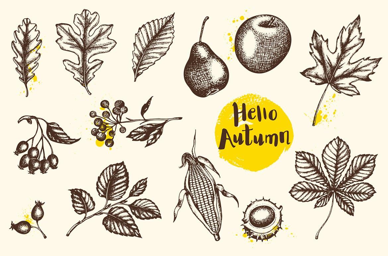水果手绘杂点风格装饰图案素材下载Vintage Autumn Design Kit插图(1)