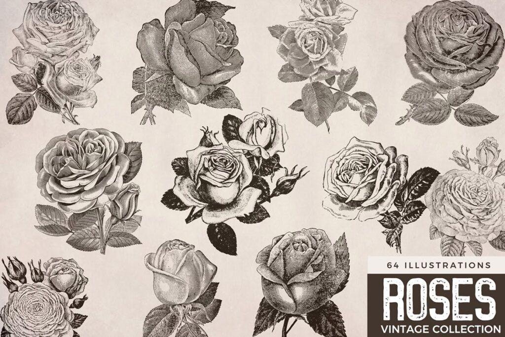 64张经典黑白玫瑰插图装饰图案花纹Vintage Roses Illustration Collection插图(1)