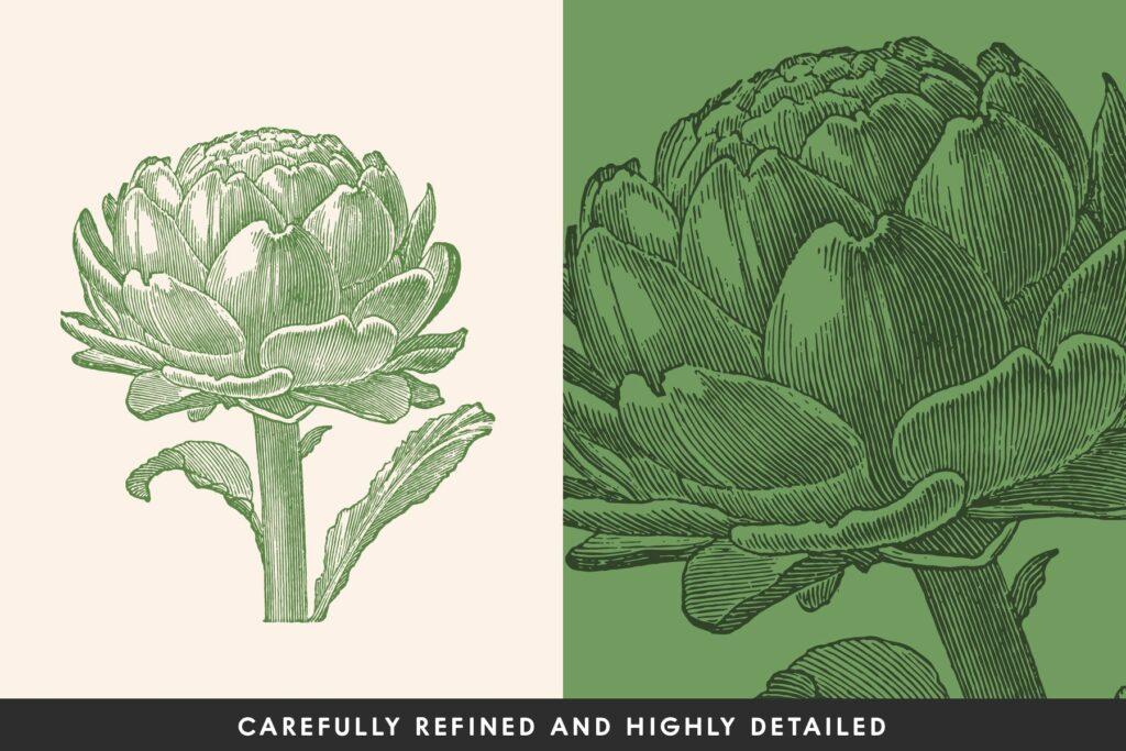 一套19个古董雕刻风格各种蔬菜插图企业品牌装饰图案Vintage Vegetable Illustrations Vol 1插图(1)