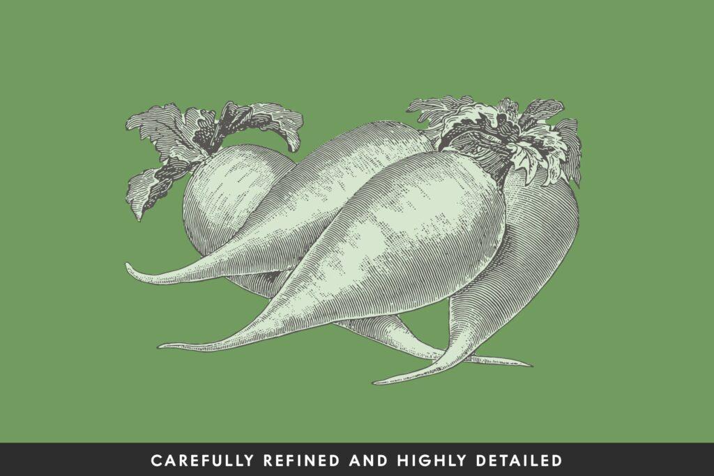 17个古董雕刻风格的各种蔬菜插图有机蔬菜装饰图案花纹Vintage Vegetable Illustrations Vol 12插图(1)