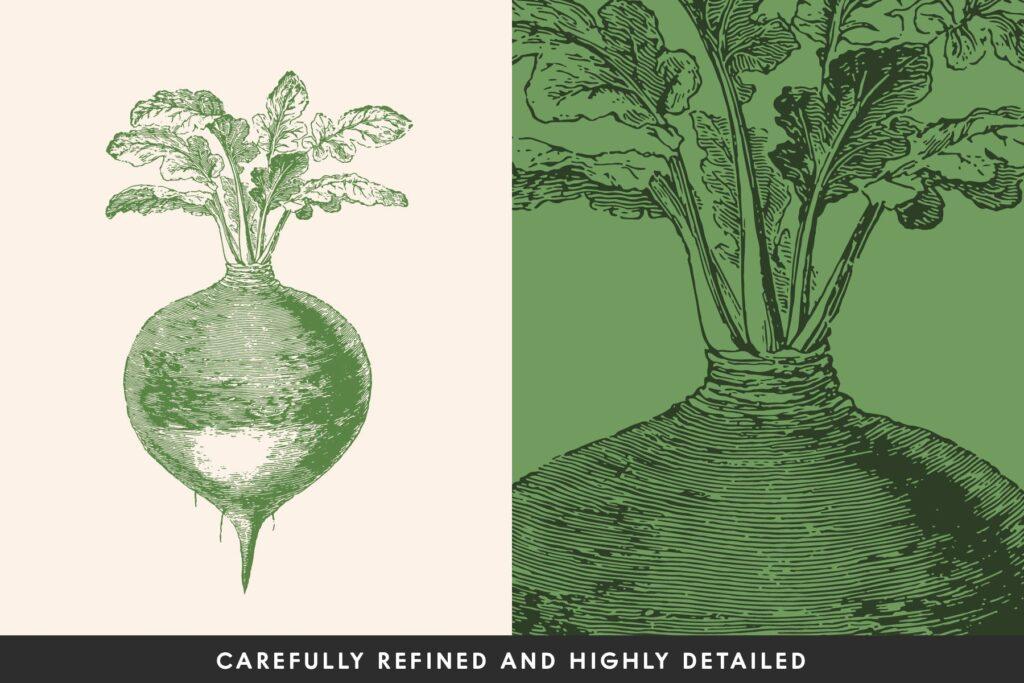 14个古董雕刻风格的各种蔬菜插图有机蔬菜装饰图案花纹Vintage Vegetable Illustrations Vol 13插图(1)