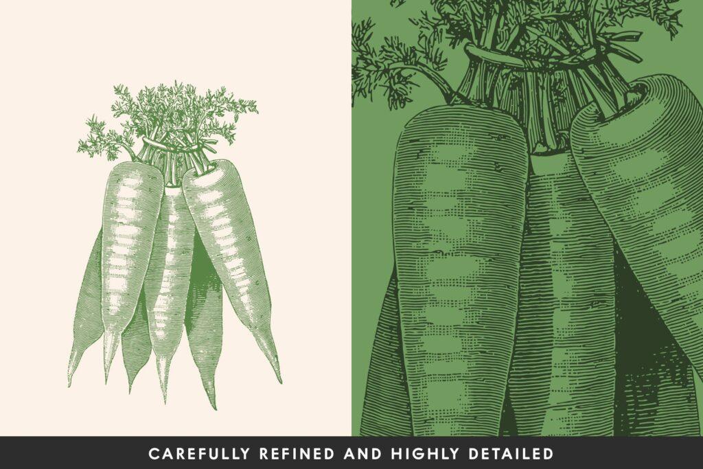 14个古董雕刻风格各种蔬菜餐饮品牌装饰图案Vintage Vegetable Illustrations Vol. 3插图(1)