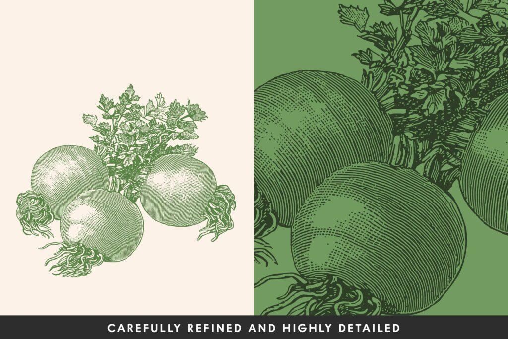 3个古董雕刻风格的各种蔬菜插图餐饮美食品牌装饰图案Vintage Vegetable Illustrations Vol. 5插图(1)