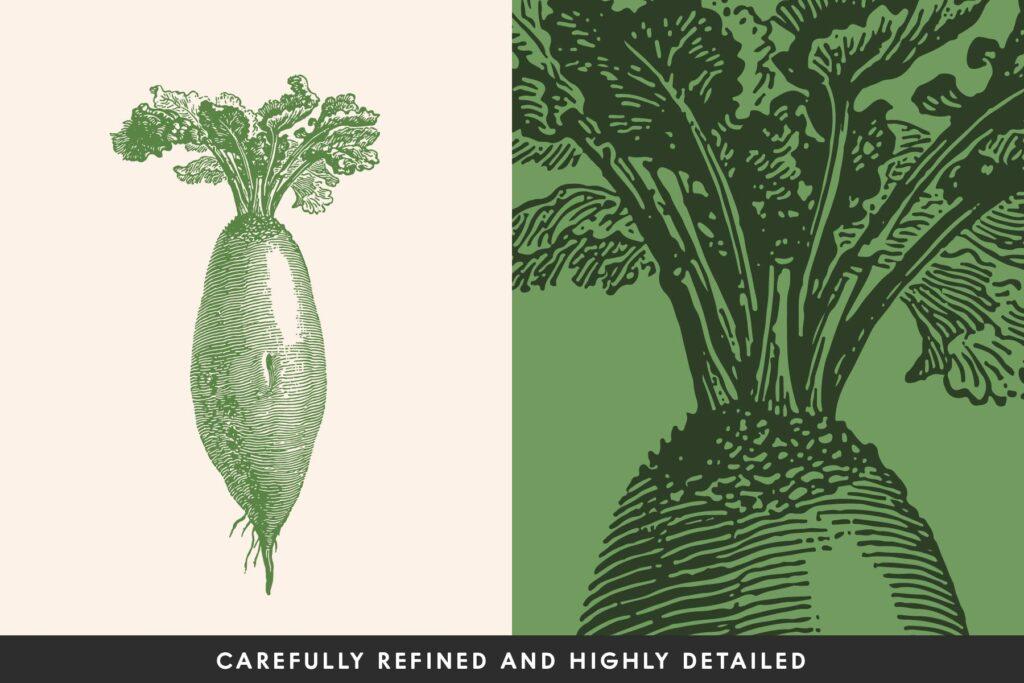 15个古董雕刻风格各种有机蔬菜插图企业餐饮品牌装饰图案花纹Vintage Vegetable Illustrations Vol 8插图(1)