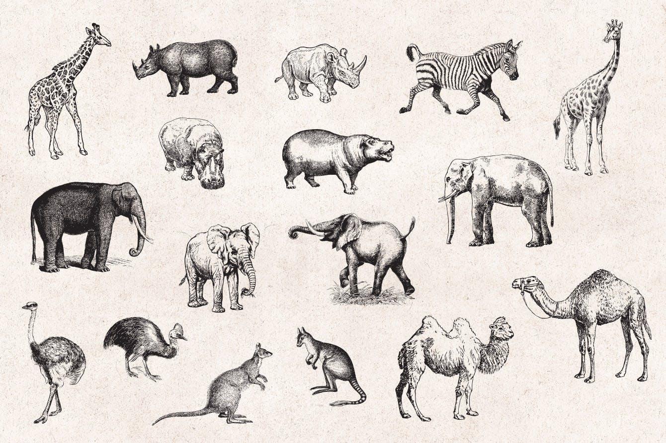 127个矢量化的各种野生动物矢量手绘风格相框装饰元素Wild Animals Engraving Illustration Set插图(1)
