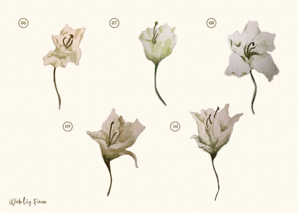 15个海葵花卉水彩插图装饰图案15 Watercolor White Lily Flower Illustration插图(2)