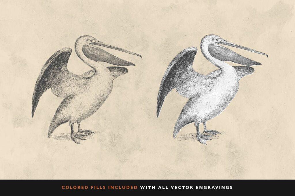 精致鸟类动态手绘图服装品牌装饰图案30 Bird Illustrations With Fills插图(2)