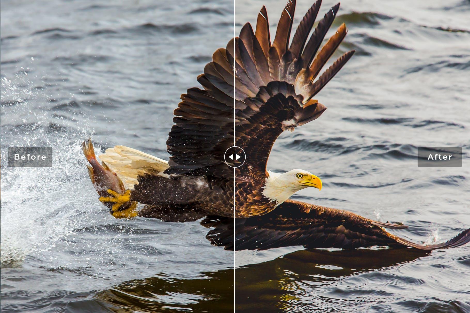 鸟类摄影优化照片效果处理LR预设Birds Wings Mobile Desktop Lightroom Presets插图(2)
