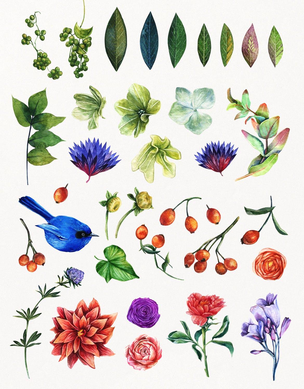 花卉/树叶/羽毛水彩元素装饰图案Enchanted Watercolor Kit插图(2)