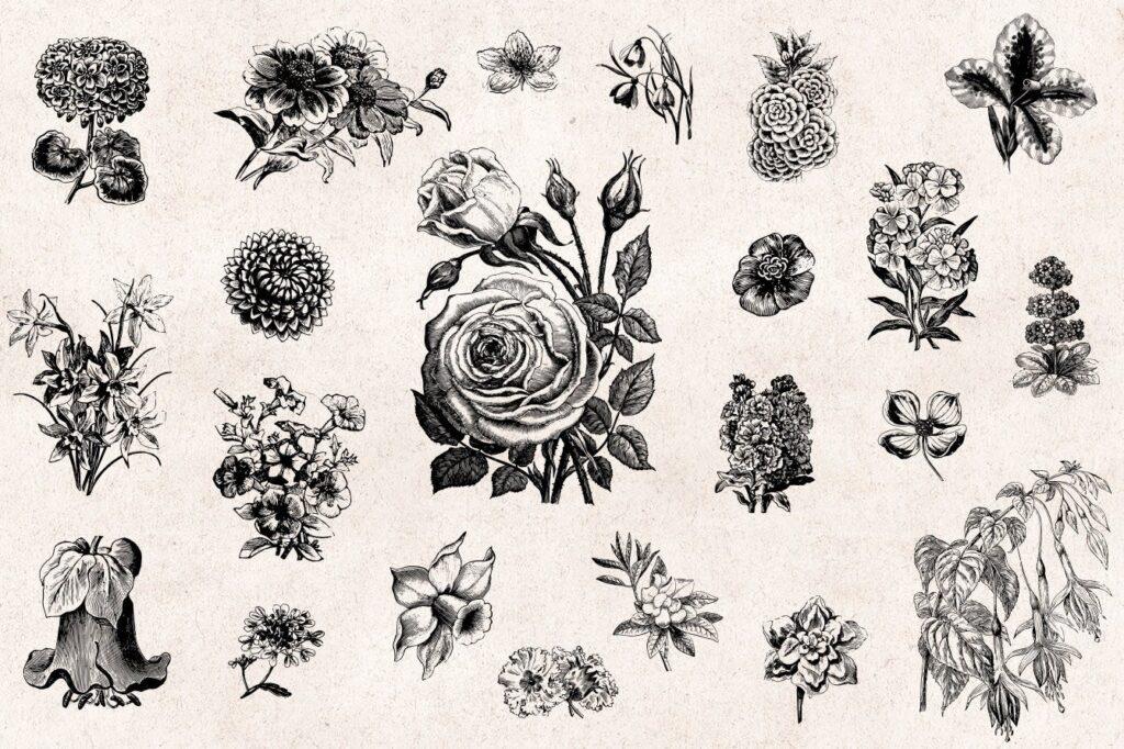 66个矢量花卉品种的古典风格版画Flowers Vintage Engraving Illustrations插图(1)