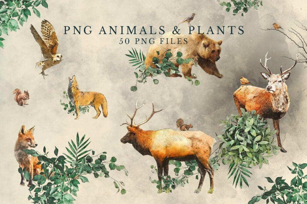 自然和森林主题元素装饰图案创意设计Forest Illustrations Graphics Kit插图(2)