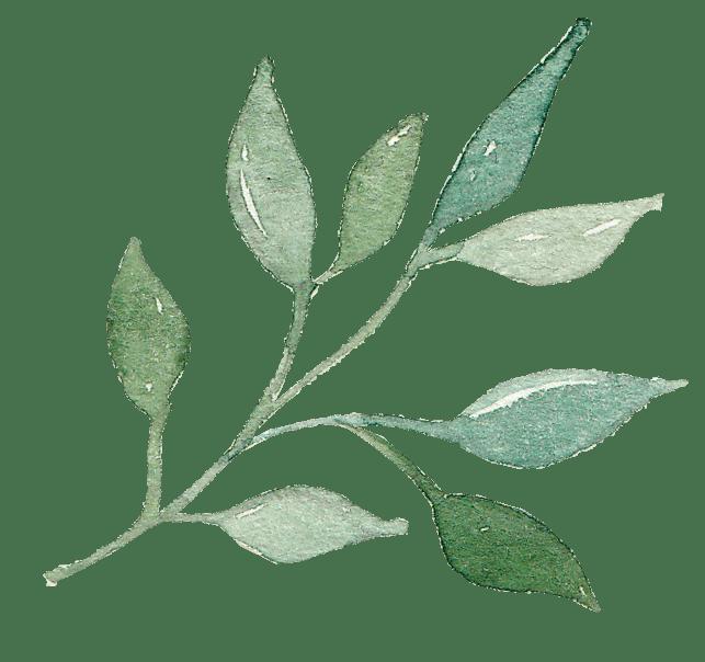绿植装饰图案花纹相关元素下载Watercolor Green Leaves clip arts插图(2)