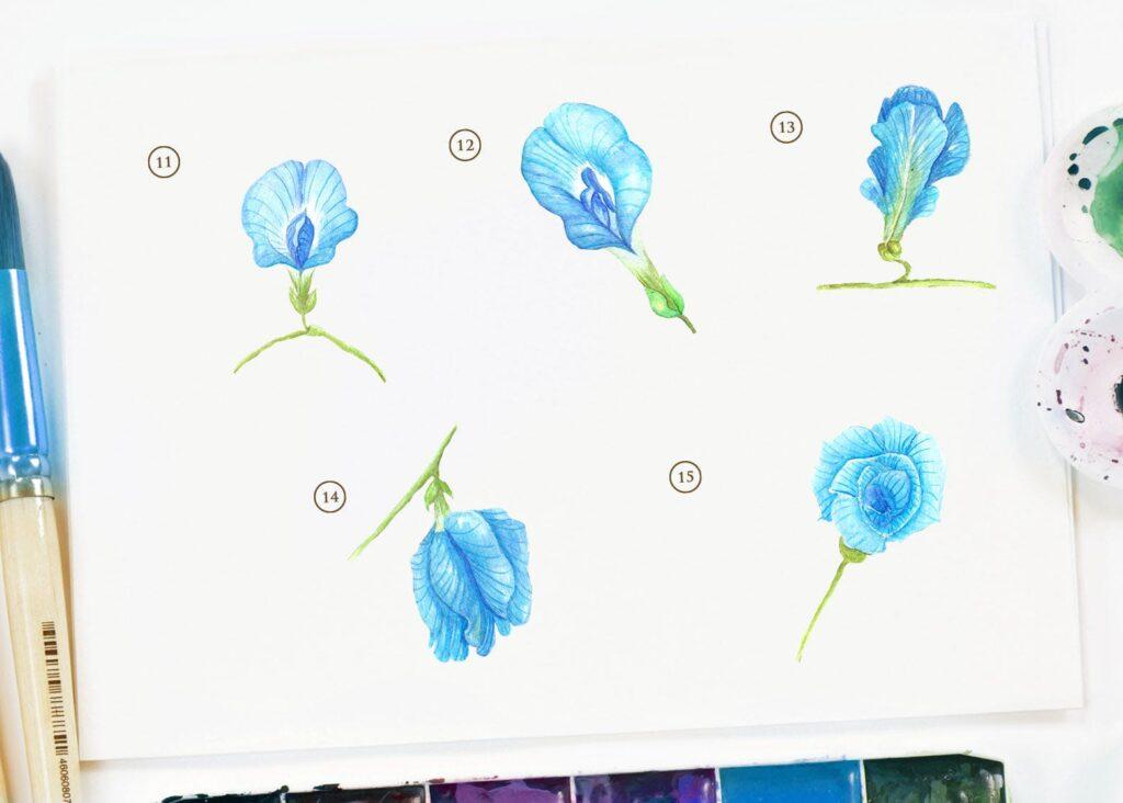 15个蓝色水彩蝴蝶豌豆花插图装饰图案15 Watercolor Butterfly Pea Flower Illustration插图(3)