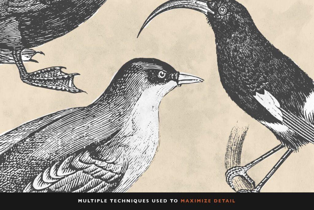 精致鸟类动态手绘图服装品牌装饰图案30 Bird Illustrations With Fills插图(3)