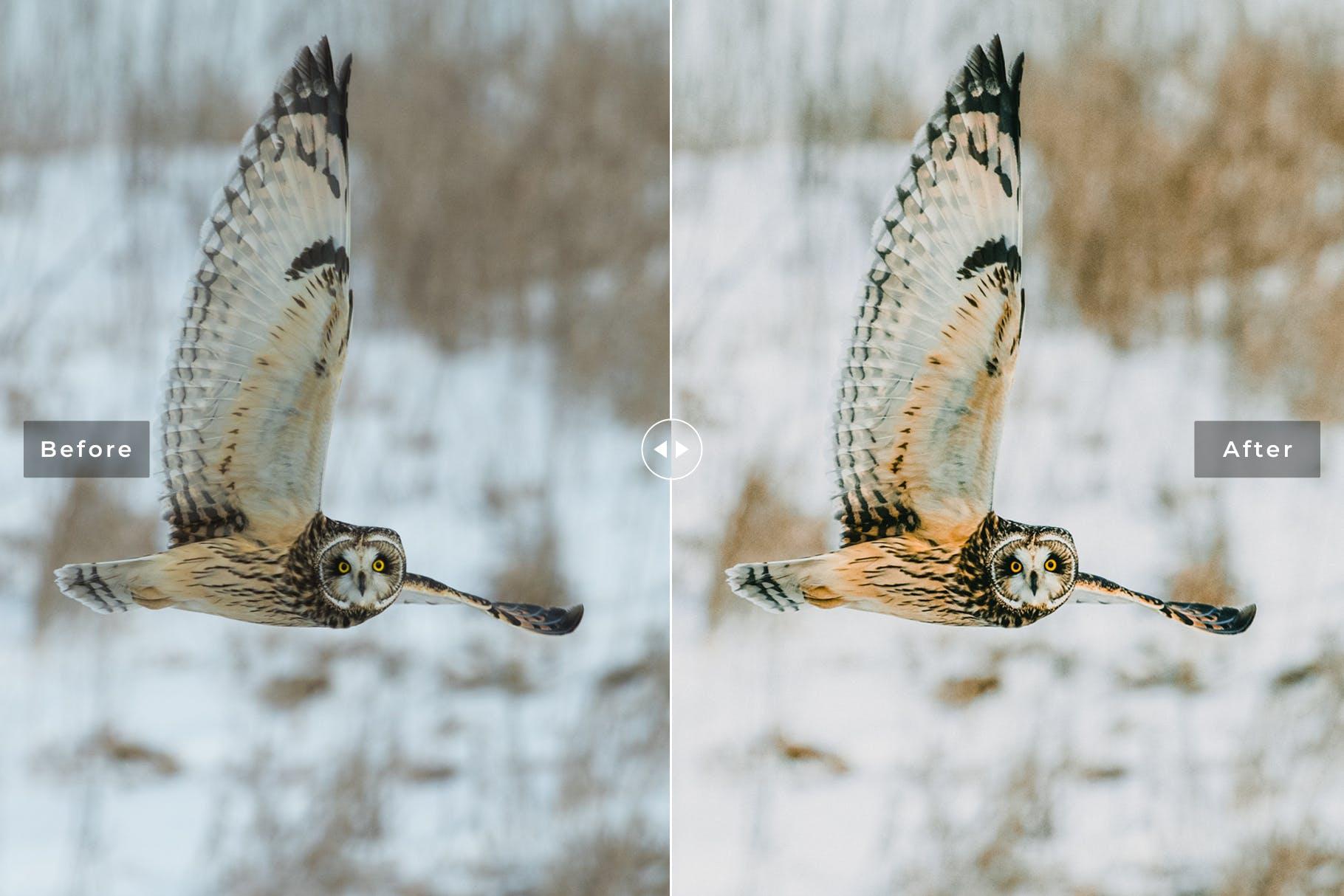 鸟类摄影优化照片效果处理LR预设Birds Wings Mobile Desktop Lightroom Presets插图(3)