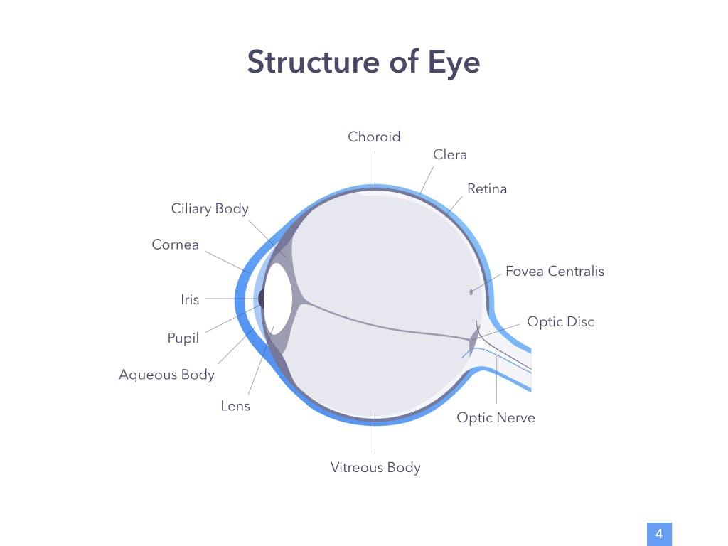 眼睛健康演讲活动PPT幻灯片模板Eye Health Keynote Template插图(3)