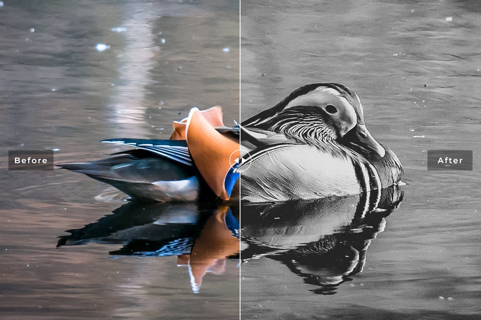 鸟类摄影优化照片效果处理LR预设Birds Wings Mobile Desktop Lightroom Presets插图(4)
