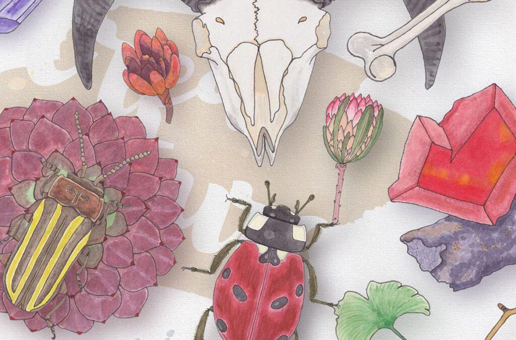 大自然生物创意图案手绘水彩装饰元素下载Watercolor Creatures vol. 1插图(4)
