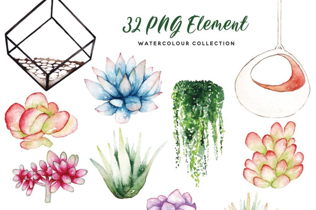 精致手绘元素企业品牌服装装饰图案花纹Succulent Terrarium Watercolor插图(5)